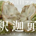 台湾フルーツ「釈迦頭(しゃかとう)」ねっとりとした甘みで美味しい!